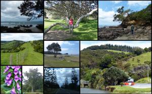 Road Trip Day 1 – Takapuna to Whangarei
