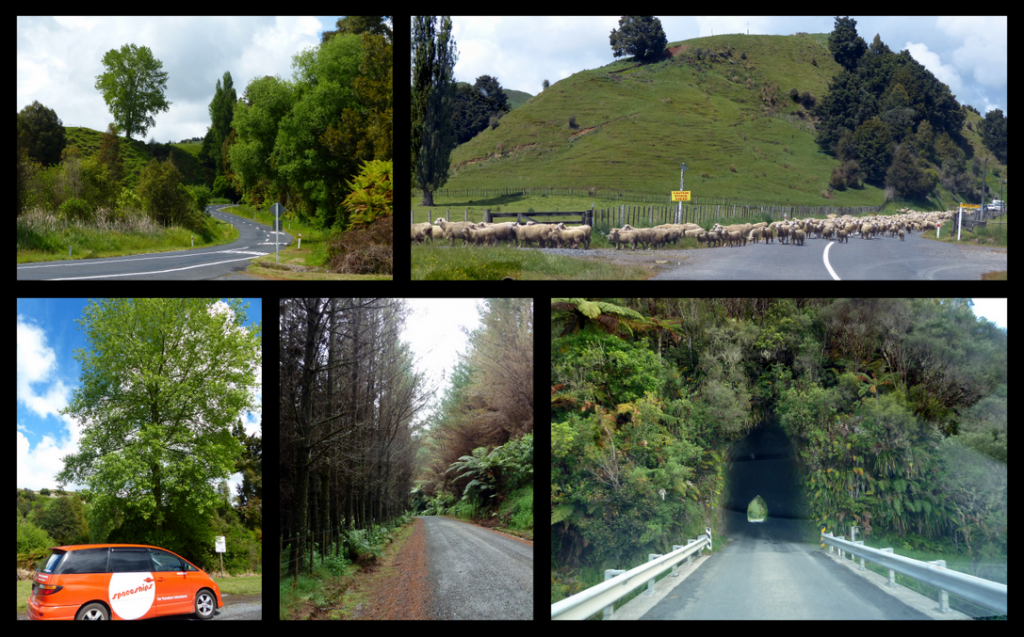 Waitomo to New Plymouth Collage