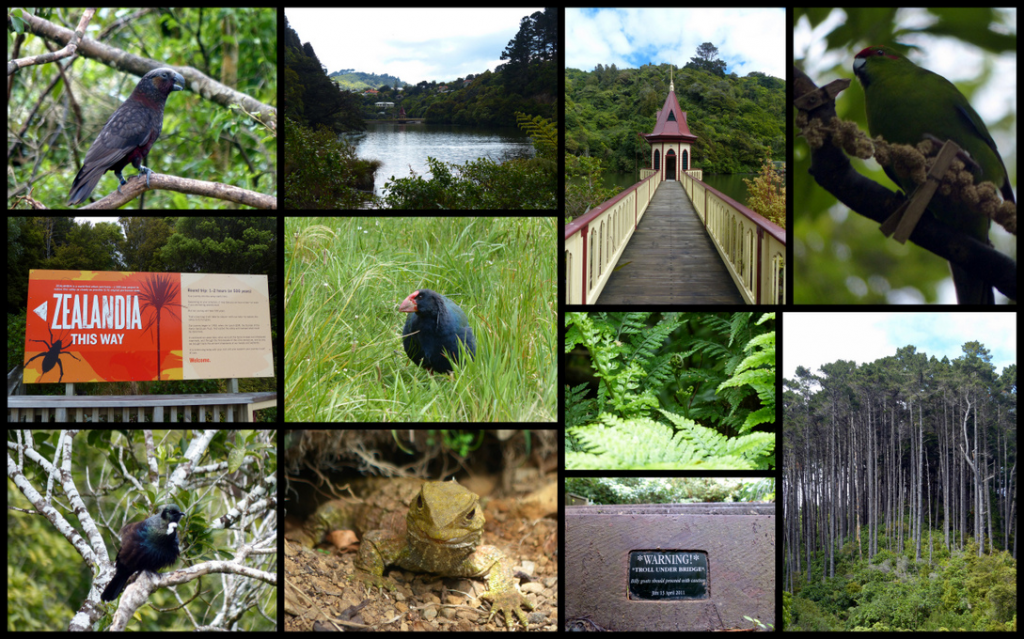 Column 1 T-B: Kaka, Welcome to Zealandia, Tui. Column 2: lake, Takahe, Tuatara. Col 3: Dam building, Fern, Sign in the valley. Col 4: Kakariki, Trees in the valley