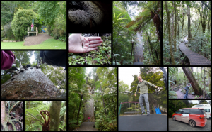 Waipoua Forest and Trounson Park Collage