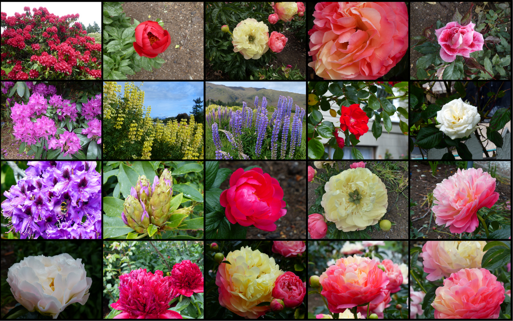 Some of the flowers from today