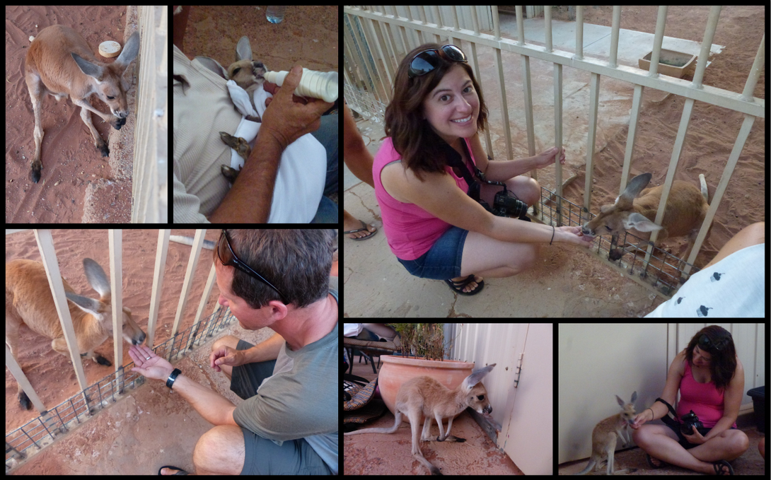 Kangaroo Orphanage