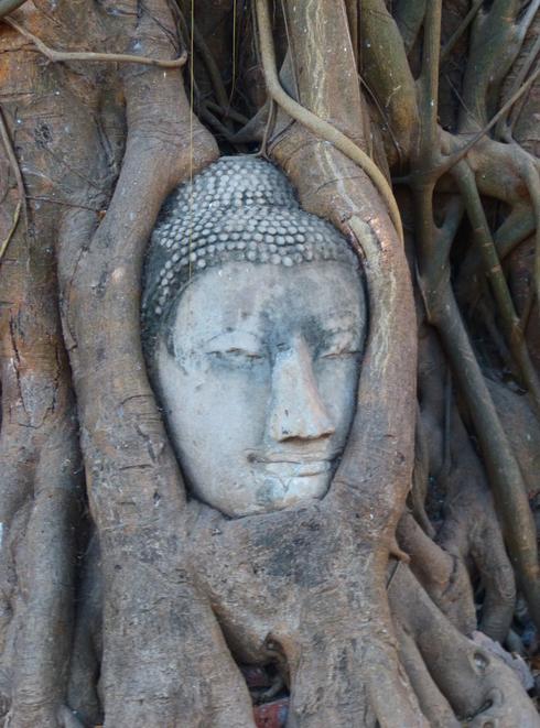 Buddha in Bodhi Tree