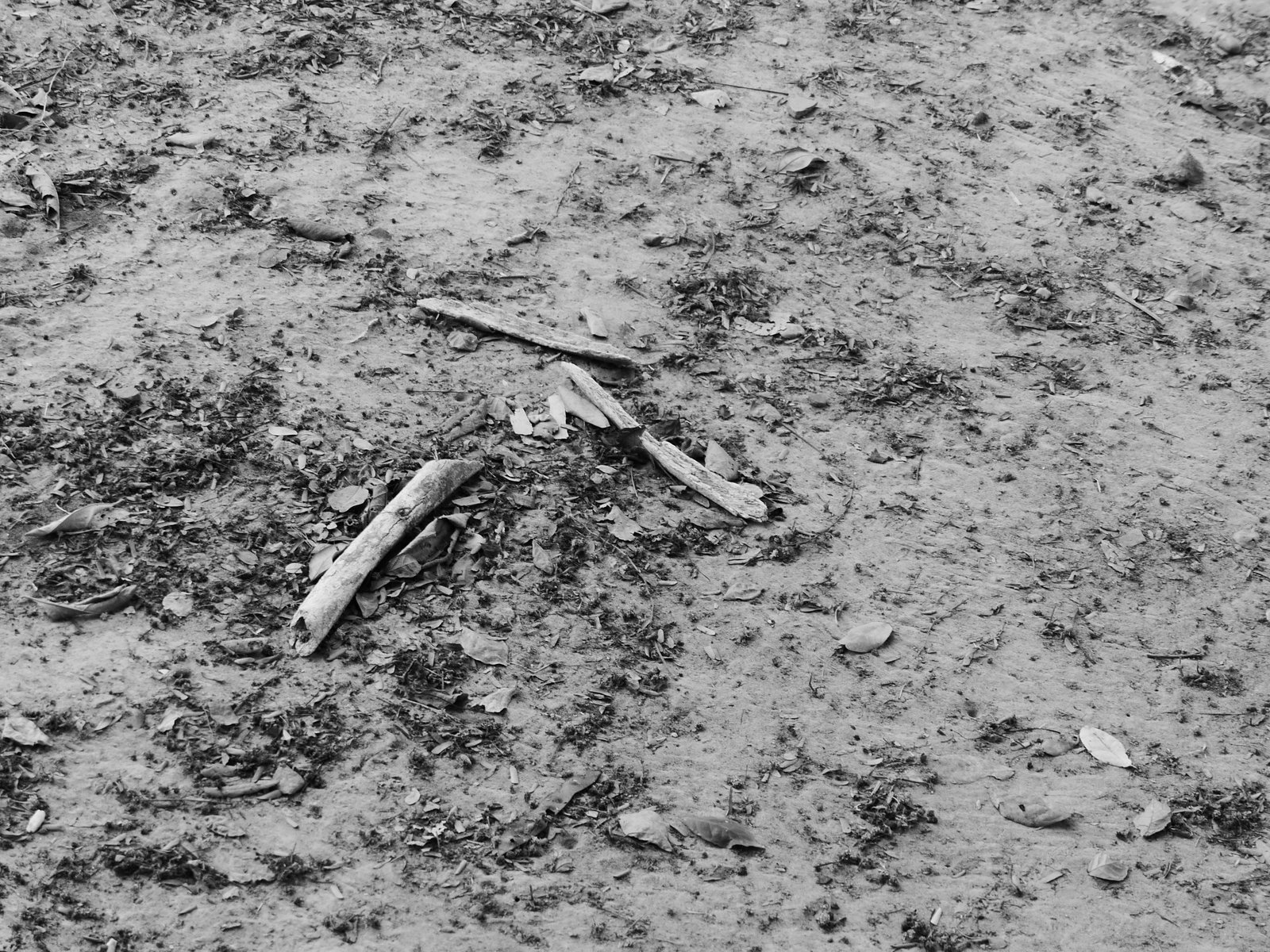 Skeletal remains in one of the mass graves at Choeung Ek. Many of the mass graves here have been left undisturbed, but bones & clothing often are uncovered after heavy rains.