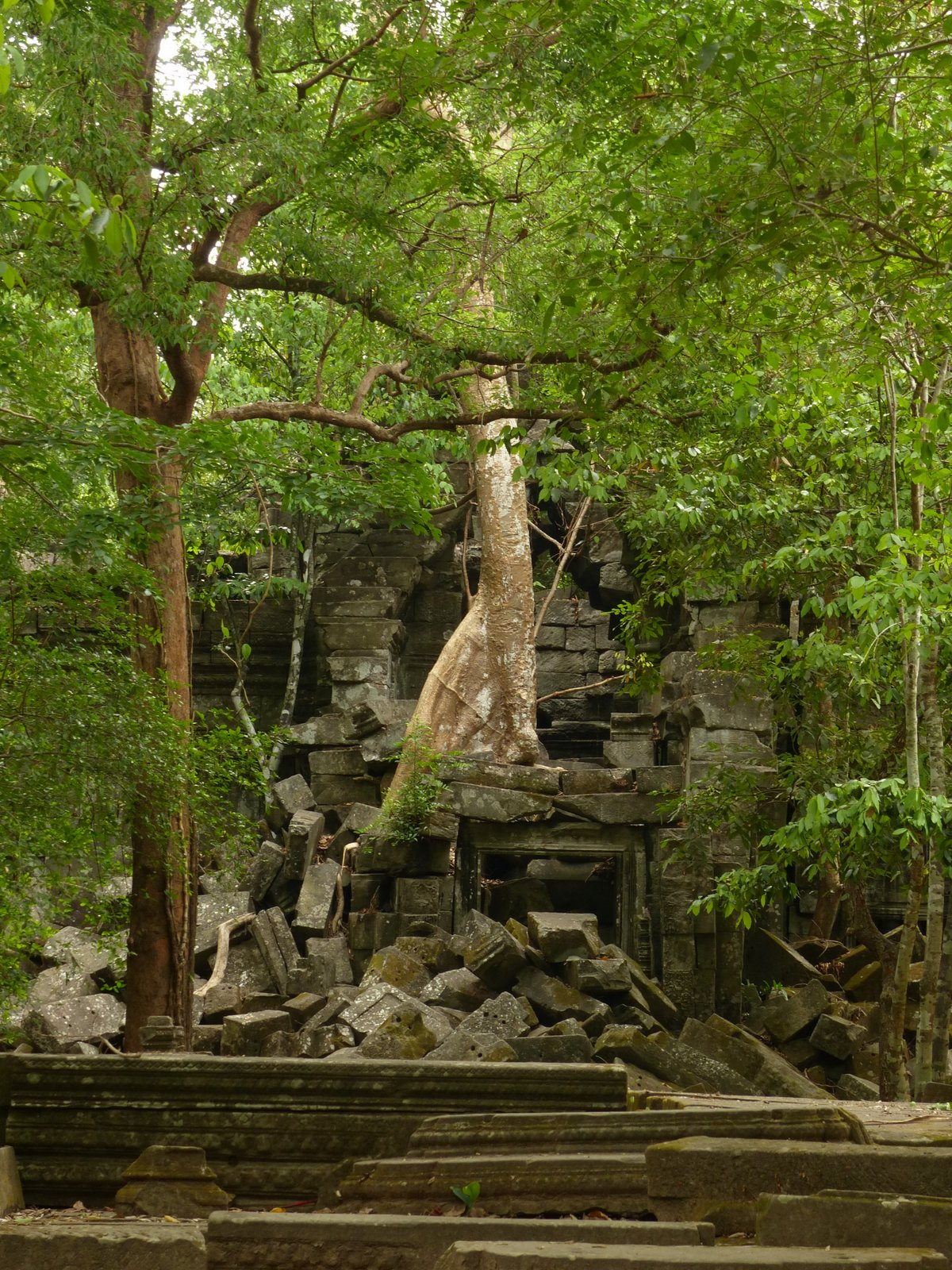 The West Gate and Beng Mealea has been taken over by banyan trees and jungle vines, toppling the walls and making the gate inaccessible. We had to climb the fallen stones to get inside the temple.