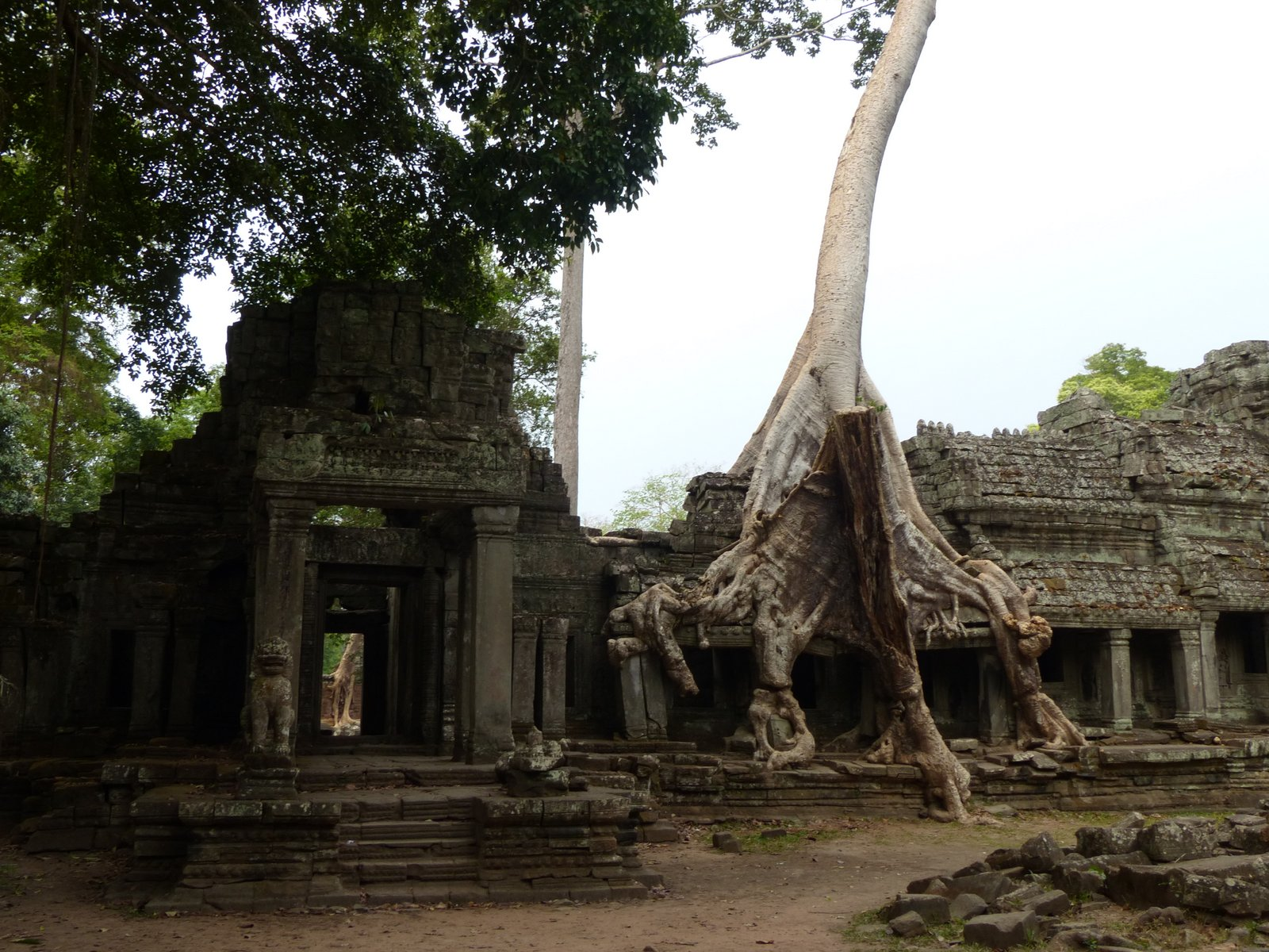 A Banyan tree has taken over, holding on to the structure with a seemingly alien grip.