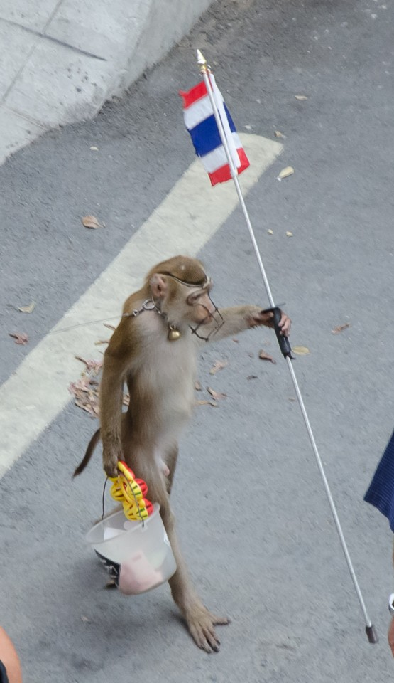 Protest Monkey outside Police HQ