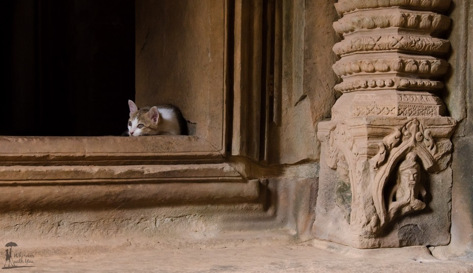 Met this little temple kitten at Banteay Samre this week, sleeping in the shade.