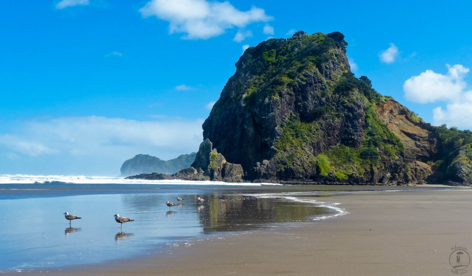With Lion Mountain in the background, seagulls jockey for position on Piha Beach. One of the famous black beaches of New Zealand, Piha's sand has a very high iron content, making it appear very dark. It was cold and windy when we were here, but the surfers were still out and the views were spectacular.