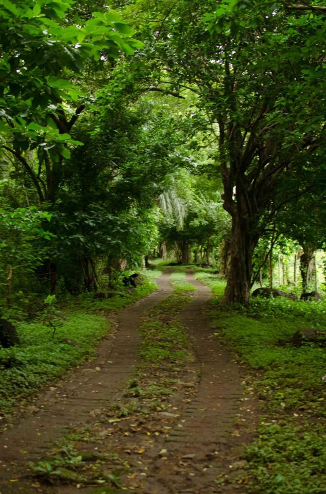 Jungle Road on Ometepe