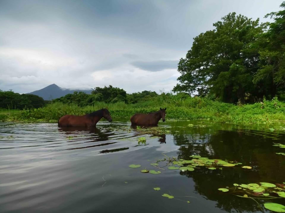 Water Horses on Lake Nicaragua
