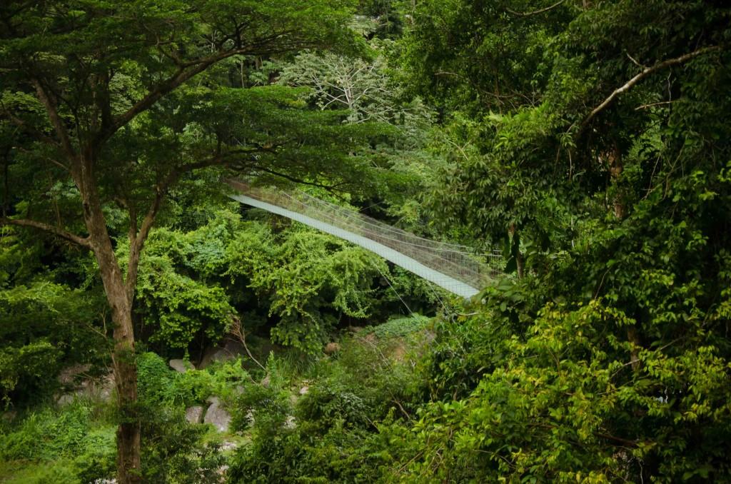 Swing Bridge over Rio Cangrejal