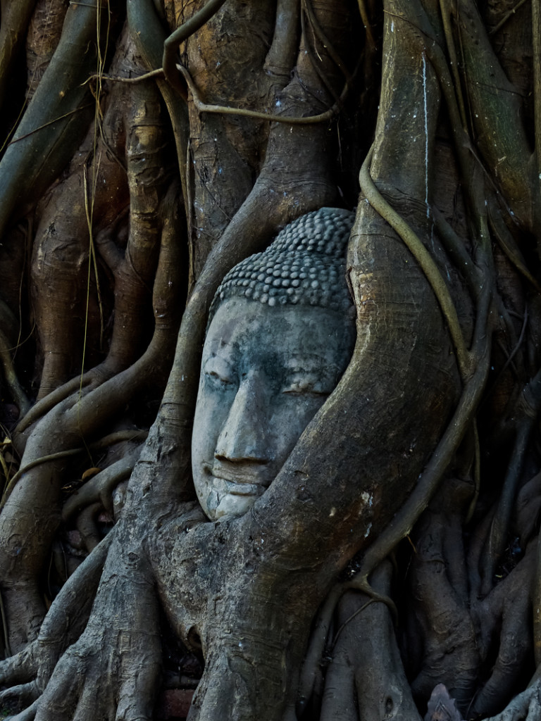 This Buddha head is all that remains of a Buddha statue at Wat Mahatat. The rest of the statue is buried within this Bodhi tree.