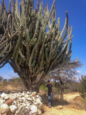 {They grow them grande-sized in the Oaxaca valley}