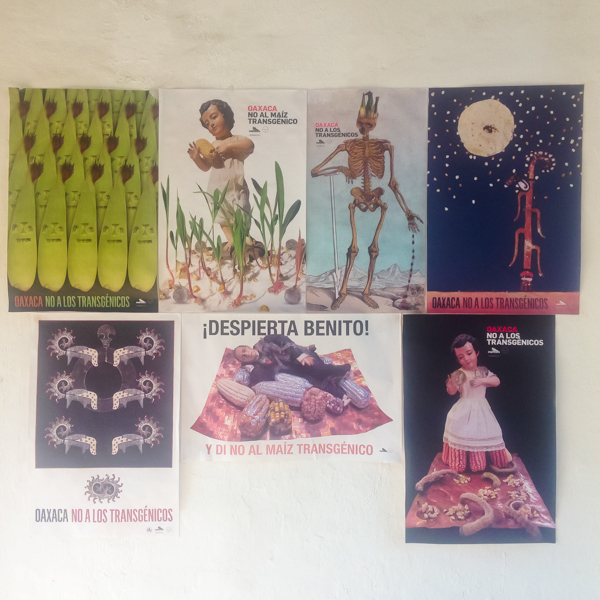 {Anti-GMO posters - Oaxaca is the birthplace of corn. And nobody here wants that heritage to be messed with.}