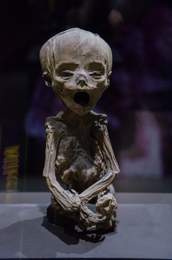 {This is the world's smallest mummy (about 8 inches in height), a fetus of about 6 months gestation, who passed away with his/her mother.}